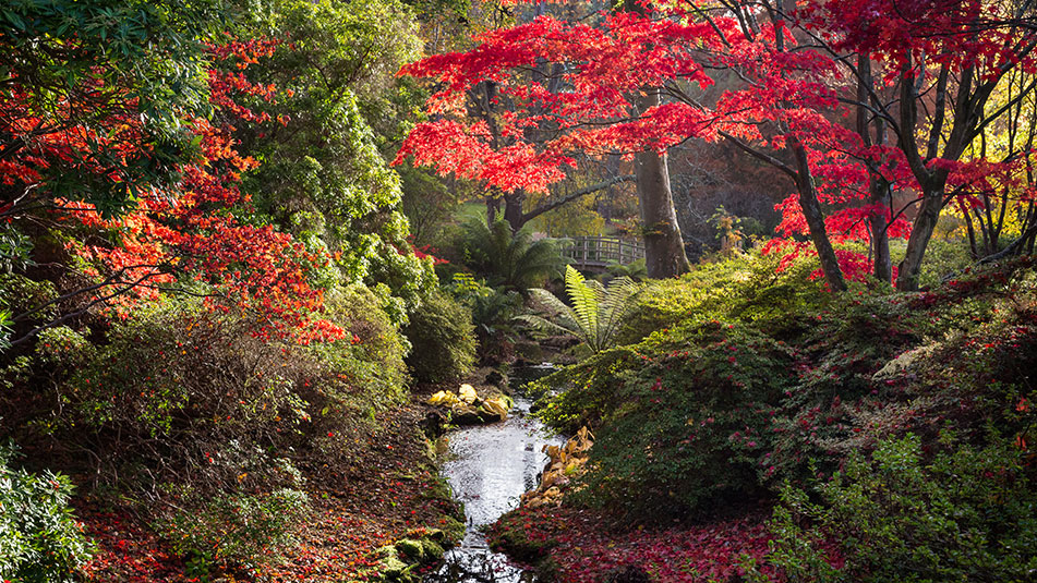 Mrs Lionel's Seat | Autumn | Exbury Gardens | New Forest, Hampshire
