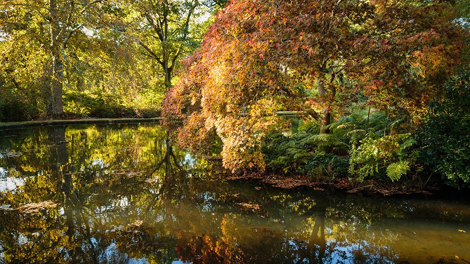Top Pond in Autumn | Exbury Gardens | New Forest, Hampshire