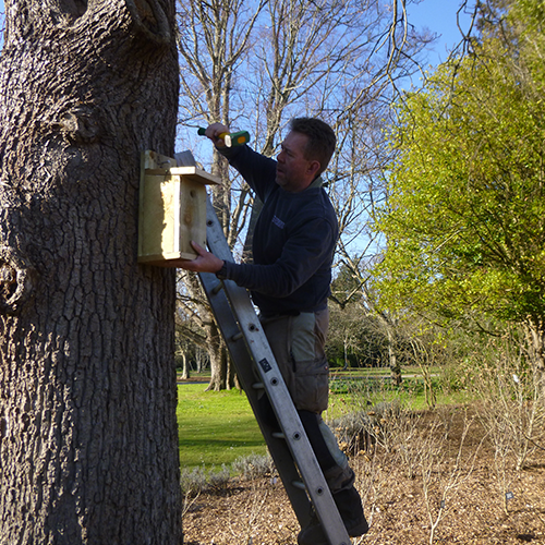 Erecting nest boxes sq