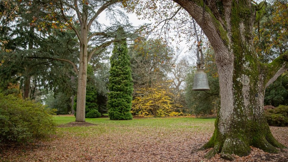 Extended December opening | winter gardens | Exbury Gardens | New Forest, Hampshire