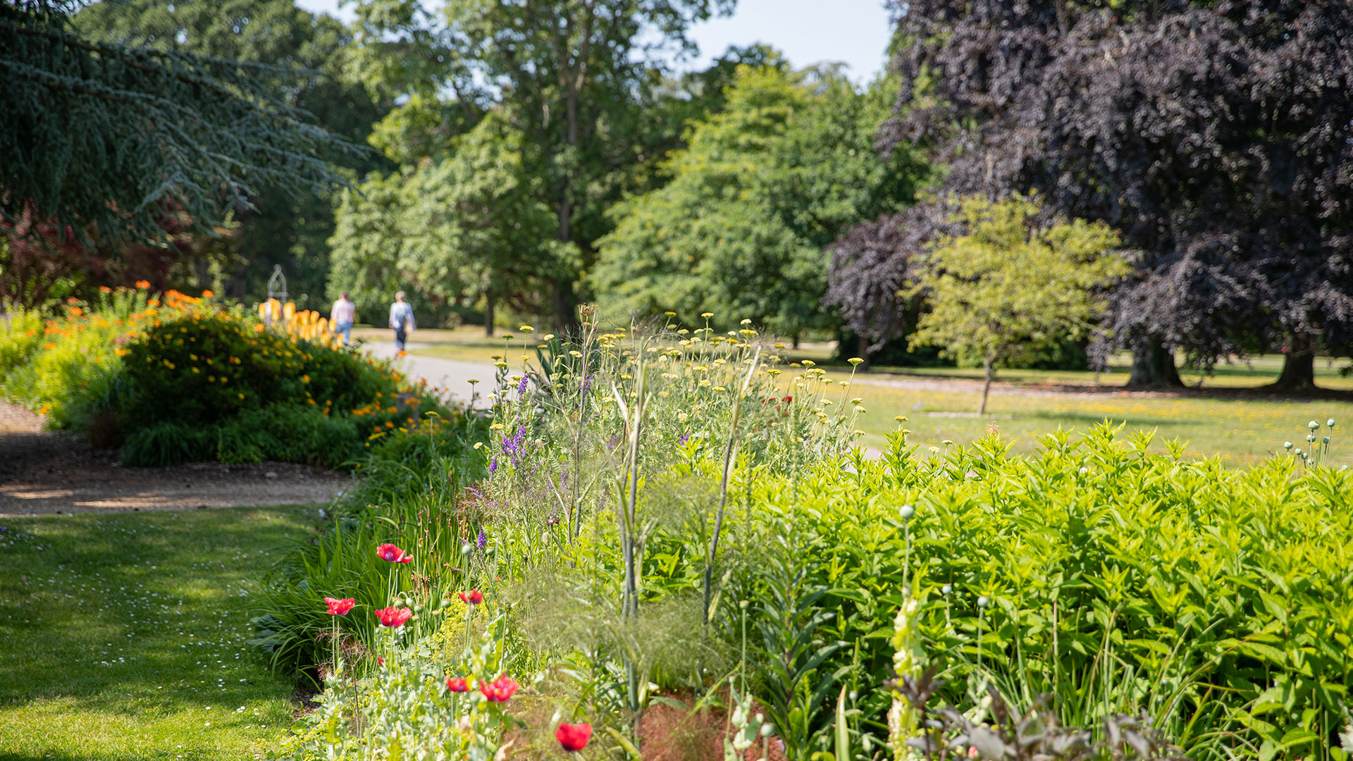 Herbaceous Garden | July, Summer | Exbury Gardens | New Forest, Hampshire