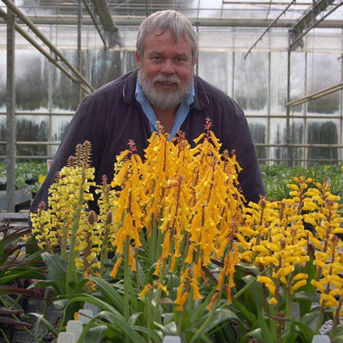 Theo Herselman with a selection of Exbury Lachenalias sq