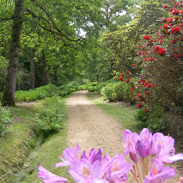 Witcher square