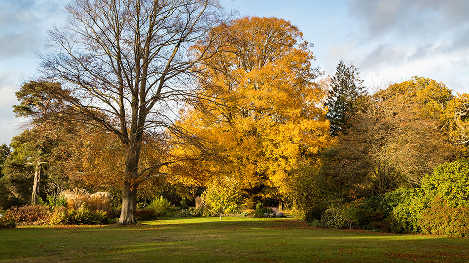 The Park | Autumn colour | Exbury Gardens | New Forest, Hampshire