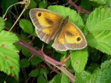 Gatekeeper male open