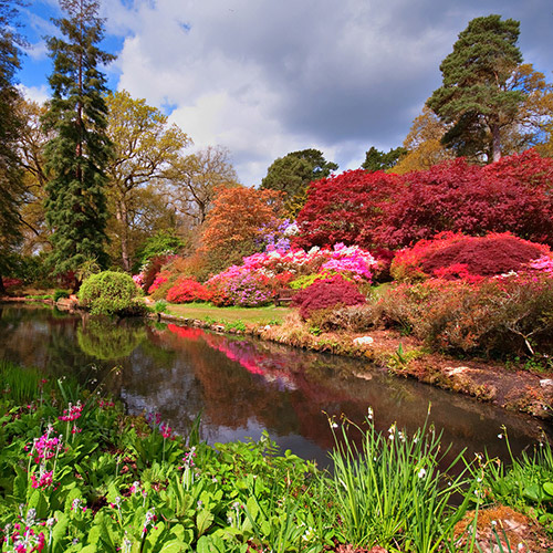 horticulture colour Exbury Gardens & Steam Railway Hampshire New Forest