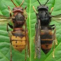 compare hornets