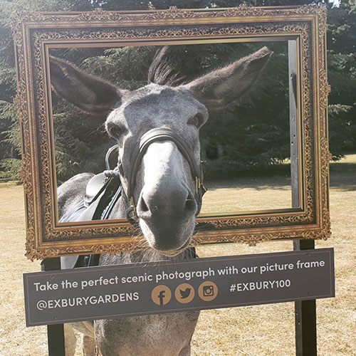 Donkey in frame; Family events ; Exbury Gardens; New Forest, Hampshire