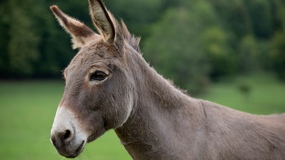 Donkey Day | Family events | Exbury Gardens | New Forest, Hampshire