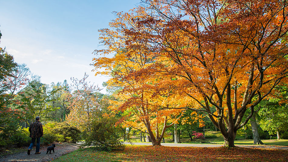 Autumn colour, lockdown opening | Exbury Gardens | New Forest, Hampshire