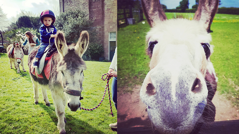 Donkey rides; Family events ; Exbury Gardens; New Forest, Hampshire